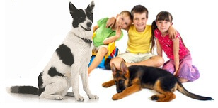 Let us match you with the perfect dog for your family!