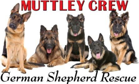 Muttley Crew Rescue For German Shepherds & Other Homeless Critters