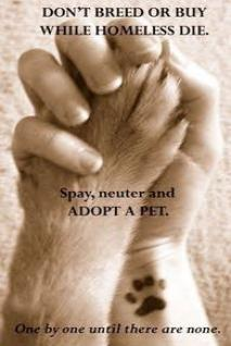 Please Make ADOPTION Your First Option - Don't Breed Or Buy While Homeless Animals Die!