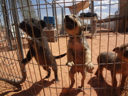Three pups being treated for mange