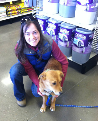 Holly's Adoption at PetSense, Durango