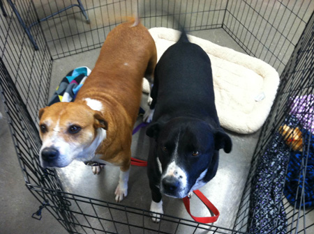 Tux and Carmen at PetSense, Durango