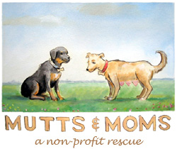 ,mutts dogs