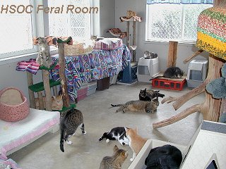 Hsoc Quot Best Friends Quot Feral Cat Room