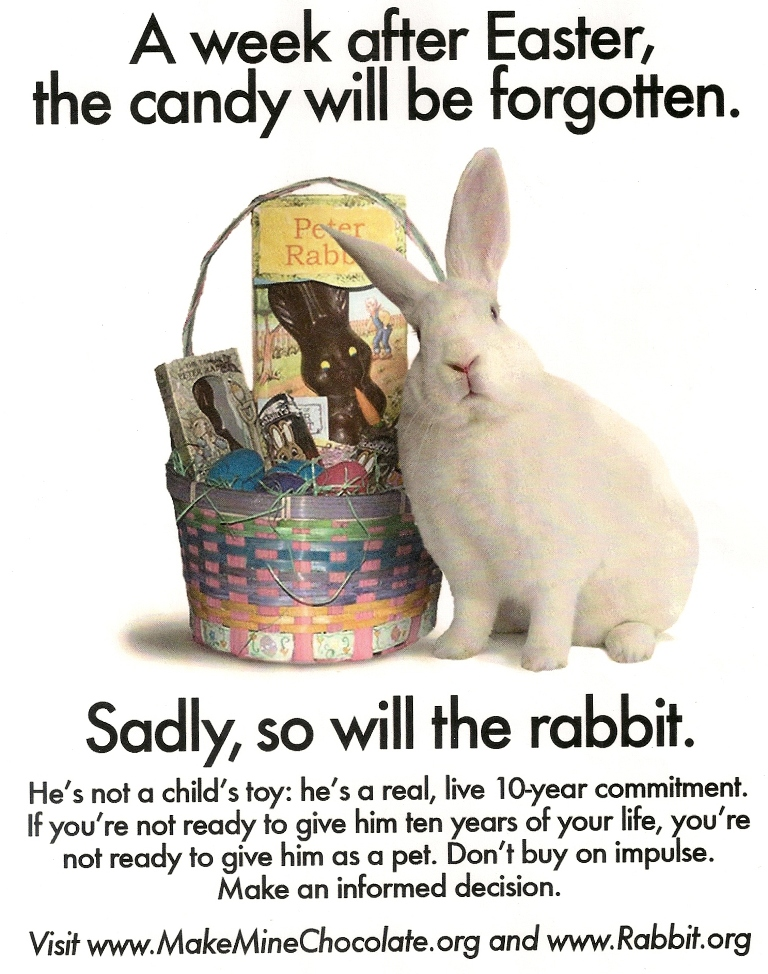 Fun Facts About Rabbits For Kids