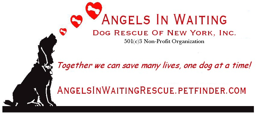 Angels in Waiting Rescue - NEW YORK