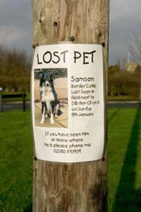 Action For Animals Humane Society: Lost and Found