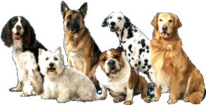 Circle Of Hope K9 Rescue saves animals of all shapes and sizes - purebred and mixed breed - all quite lovable!