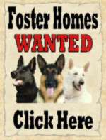 Foster Homes always needed - If you have the time and the love to spare.